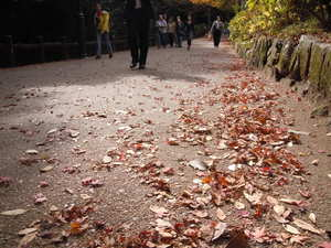 -終了しました- 12月10日「たきみち ボランティア落葉清掃」