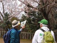 「箕面観光ボランティアガイド」のオープンハイキング2016年4月・5月