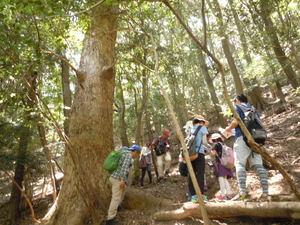 -募集締め切りました- 5月21日 自然観察会5月-新緑の森を楽しもう!-