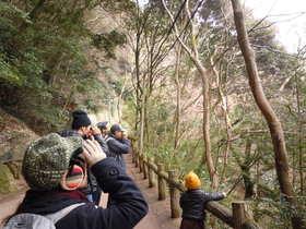 -終了しました- 1月21日 自然観察会1月-冬の野鳥と冬の果実をさがそう-