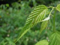 -雨天中止となりました- 5月13日 自然観察会-新緑の森を楽しもう-