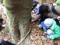 参加者募集中! 自然観察会12月-落ち葉のしたのいきものかんさつ-
