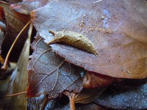 -終了しました- 自然観察会12月13日「落葉の下の生きものを探そう!」