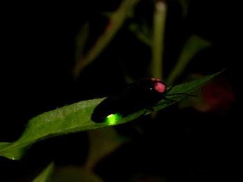 【イベント】6月22日『ホタル観賞の夕べ』~蛍の光で勉強会~