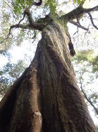 【イベント】 10月14日(月・祝) 森を楽しむ自然観察会