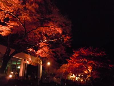 【イベント】11/22~24 昆虫館前紅葉ミニライトアップ