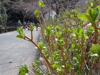 【イベント】3月20日・24日は箕面の春を1日満喫!