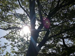 5月の紫外線量は真夏と同じ!?