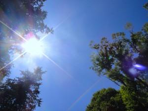 春の紫外線、気をつけましょう!
