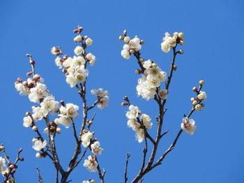 春のお肌、揺らいでいませんか?