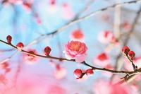 体の中から春のゆらぎ肌対策を!