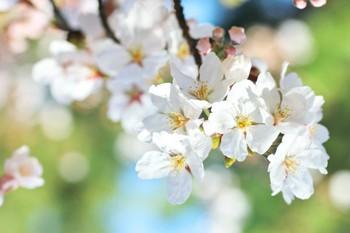 紫外線の影響を受けやすい春のお肌!対策はACE?