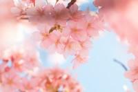 フェイスマスクで春のセレモニーの美肌準備!
