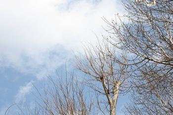 クリームで叶える冬の美肌*,゜.:。+゜*,゜.:。+゜*
