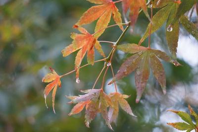 からだやお肌、不調を感じやすいのは秋!?