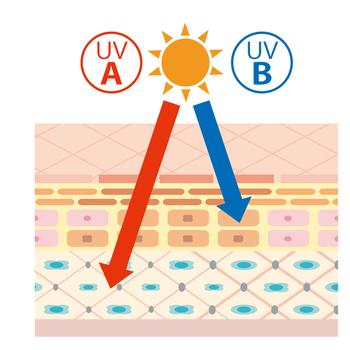 気になる紫外線についておさらいしましょう!