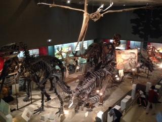恐竜 標本 骨格標本 自然史博物館