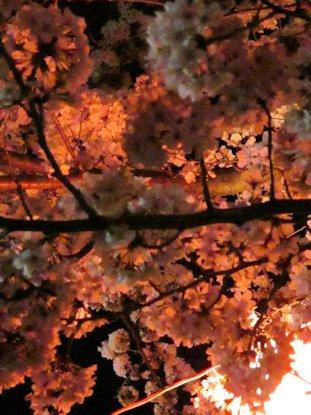 五月山の夜桜見物