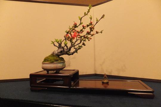 滋賀・草津 「滋味 康月」 嫁の誕生日祝いで家族で感激してきました!