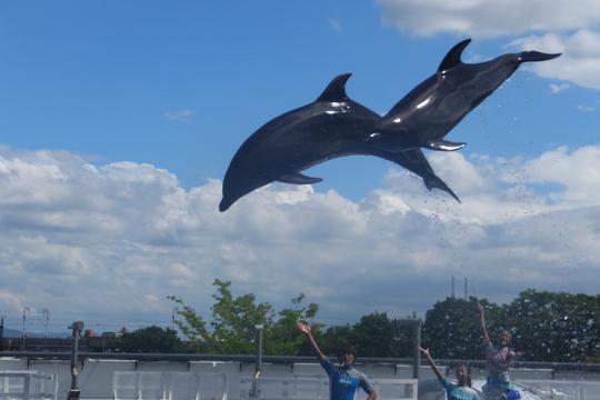 京都・梅小路公園 「京都水族館」 夏休みの娘を連れて行きました!