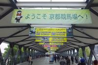 淀・京都競馬場 「関西ラーメンダービー2015」 第1レース!