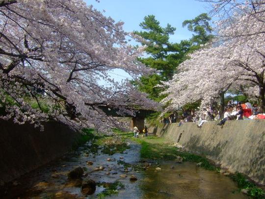 西宮・苦楽園 「トンボ」 鉄板焼きを食べて桜を満喫しました!