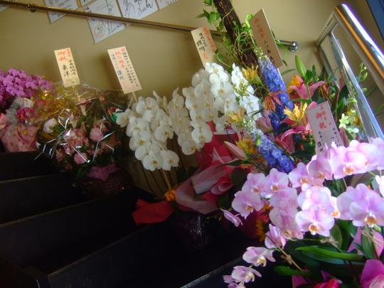 中津 「情熱うどん讃州」 5周年記念幻のメニュー キタムラ君