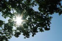 気分がめいった時は、太陽の光を浴びる機会を増やそう