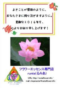 花・植物、動物と人間の違い