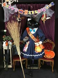ハロウィン コスプレ ディスプレイ スタジオ 写真 飾り ほうき 魔女 ゴスロリ ロリィタ 体験