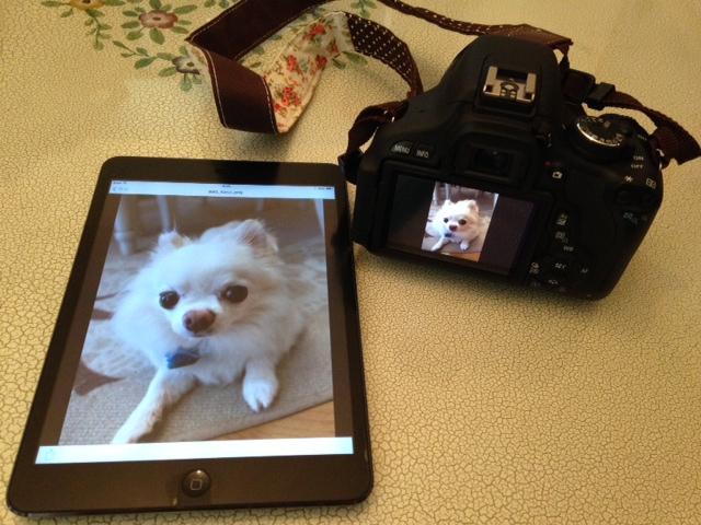 一眼レフで撮影した画像をiPad MINIで確認できるようになりました!大阪コスプレ体験サテライトドア