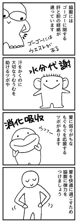 東洋医学 肝 脇腹 経絡