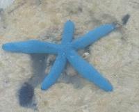 サンゴ礁に囲まれた海には 生き物がいっぱいです!