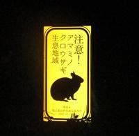 実はすごいいきもの「アマミノクロウサギ」にであえるかも