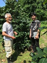 国産の徳之島コーヒー農園です。