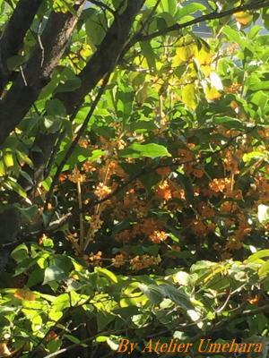 秋酣(2)・・・・・我が家の小さな庭