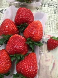 奈良佃農園イチゴ