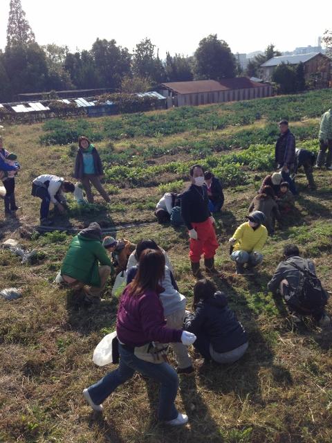 やなもり農園収穫祭2013秋